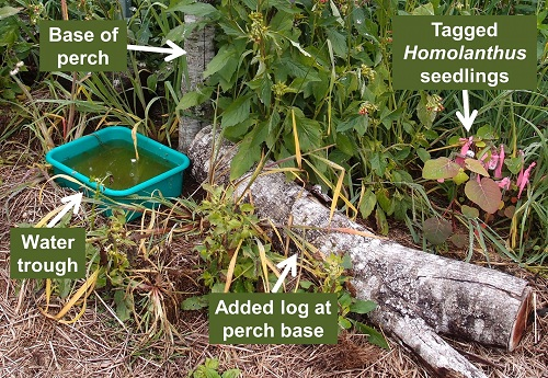 Tagged seedling cluster under bird perch after 9 months