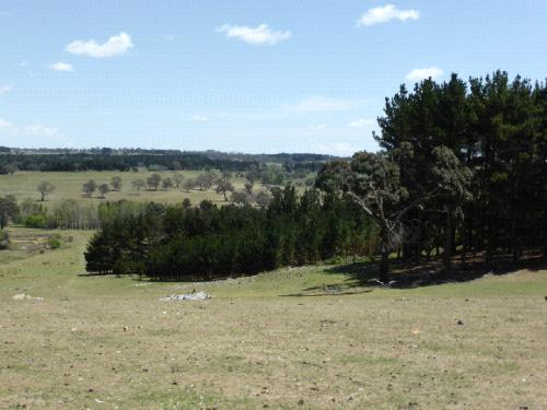 The Hill, Kentucky showing grazed paddocks, strategically planted timber trees, remnant paddock eucalypts and riparian zone planting